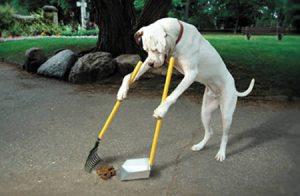 a97180_g119_7-poop-scooping